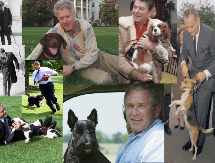 Tutti i cani del presidente